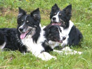 Dusty,Joschi,Merlin060617PICT0268.JPG